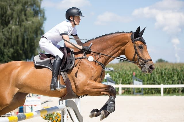 Physiotherapy | Horse Riding